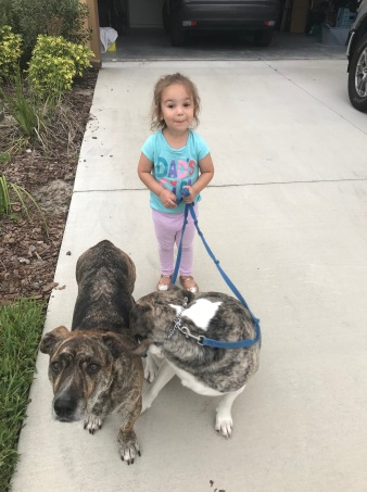 Helping Walk the Dogs